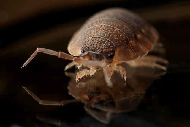 How Does Baby Powder Kill Fleas