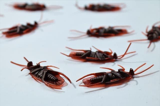 Flea Bombs Safe For Babies